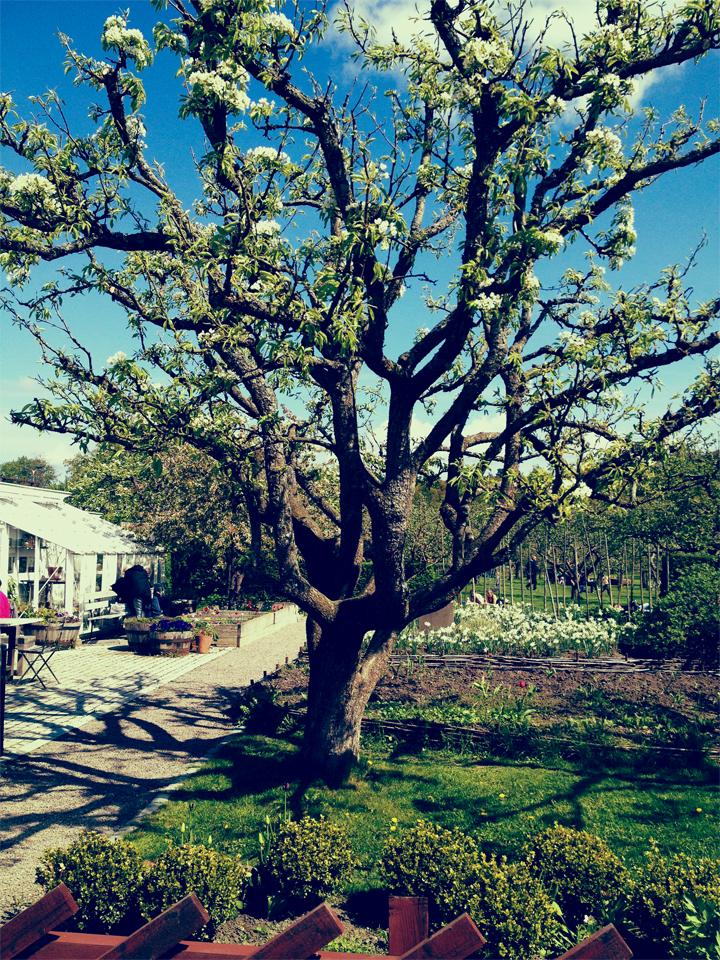 Rosendalsträdgård